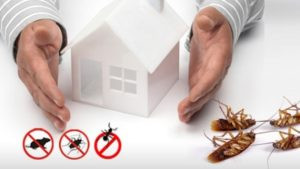 5 Easy Ways to Keep Pest Free Home